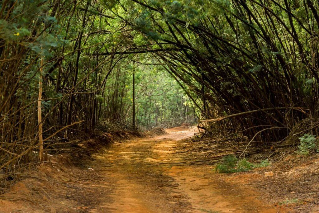 Life Coaching - Dirt road running through undergrowth