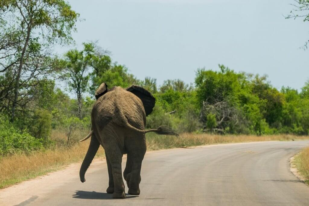 Life Coaching - Elephant walking down tarred road